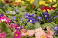 Multicolored garden flowers in the park. stock photography