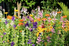 Multicolored garden flowers Stock Photo