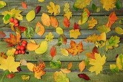 Multicolored gebladerte op een oude houten lijst Heldere kleuren van de herfst Stock Afbeeldingen