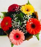 Multicolored gerberas stock foto