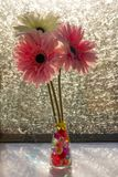 Multicolored gerberas on the background of a frozen window with a frosty pattern. royalty free stock photo