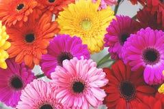 Multicolored gerberas in een boeket, hoogste mening De achtergrond van de bloem stock foto's