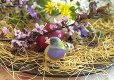 Multicolored Gouldian finch between blooming spring flowers and a red Easter egg. The spring flowers are Ranunculus, Chamomile, Wild Violets, Polish Primrose stock photo