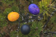 Painted eggs in a tree. Stock Photo