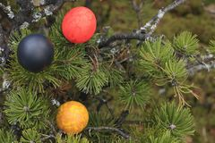 Painted eggs in a tree. Stock Photography