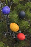 Painted eggs in a tree. Royalty Free Stock Images