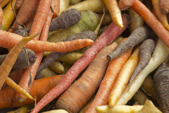 Multicolored Heirloom Carrots Stock Photography