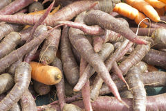 Multicolored Heirloom Carrots Royalty Free Stock Photography