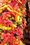 Multicolored Hot Chili Peppers in Majorca. Bunch of multicolored hot peppers as a popular Majorca souvenir Stock Image