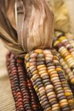 Multicolored Indian corn. Stock Photo