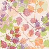 Multicolored leaves background Stock Photo