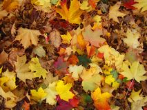 Multicolored leaves lie on the ground in autumn. stock photo