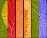 Multicolored Leaves Texture Stock Image