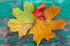 Multicolored leaves on a wooden surface stylized under the dial. Autumn background Stock Image