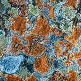 Multicolored Lichen Royalty Free Stock Images