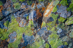 Multicolored Lichen Background Royalty Free Stock Images