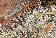 Multicolored lichens growing on red rocks stock photo