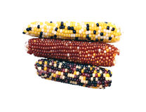 Multicolored little ears of corn isolated Royalty Free Stock Photos