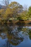 Multicolored loofbomen die op de banken van de rivier groeien en op de oppervlakte weerspiegelen royalty-vrije stock afbeelding