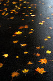 Multicolored maple leaves on the asphalt after rain in autumn. stock photo