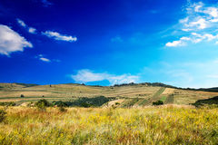 Multicolored meadow royalty free stock photos