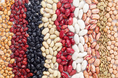 Multicolored mixed dried beans in rows Royalty Free Stock Photography