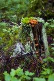 Multicolored mos in het bos Royalty-vrije Stock Afbeeldingen