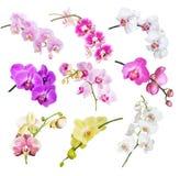 Multicolored orchideeën op wit stock fotografie