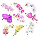 Multicolored orchids on white stock photography