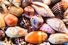 Multicolored overzeese shells achtergrond Kleine shells close-up Overzeese shell bannermalplaatje Stock Foto