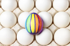Multicolored painted easter egg on white tray, food celebration photography Stock Images