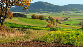 Multicolored palette of autumn stock image