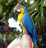 Multicolored parrot Royalty Free Stock Photography