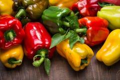 multicolored peppers Στοκ φωτογραφία με δικαίωμα ελεύθερης χρήσης