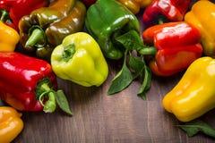 multicolored peppers Στοκ εικόνες με δικαίωμα ελεύθερης χρήσης