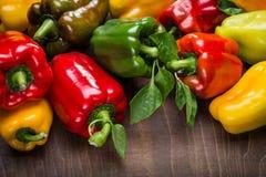 multicolored peppers Στοκ Εικόνες