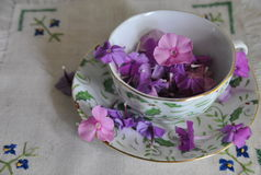 Multicolored phlox flowers in a porcelain cup stock images