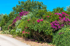 Multicolored plants on a country street stock photography