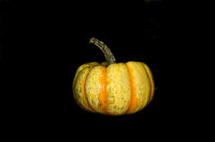 Multicolored Pumpkin Royalty Free Stock Photos