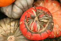 Multicolored pumpkins Stock Images