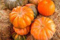 Multicolored pumpkins on the hay, close up. Autumn harvest, farm stock image
