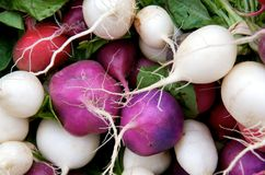 Multicolored radishes Royalty Free Stock Photos
