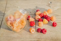 Multicolored raspberries in a glass jar on  old wooden background. Red and yellow raspberries in a glass jar on a old wooden background Royalty Free Stock Photography