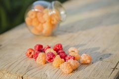 Multicolored raspberries in a glass jar on  old wooden background. Red and yellow raspberries in a glass jar on a old wooden background Stock Photo