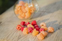 Multicolored raspberries in a glass jar on  old wooden background. Red and yellow raspberries in a glass jar on a old wooden background Royalty Free Stock Images