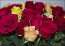 MULTICOLORED RED AND YELLOW ROSES. FRESH CUT ROSES IN A BOUQUET AND READY FOR A GIFT Stock Image