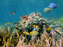 Multicolored Reef Stock Image