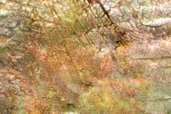 Multicolored rock background Royalty Free Stock Photography