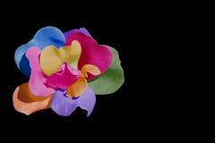 Multicolored rose Stock Photos