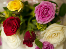 Beautiful Multicolor Rose Bouquet Royalty Free Stock Photography
